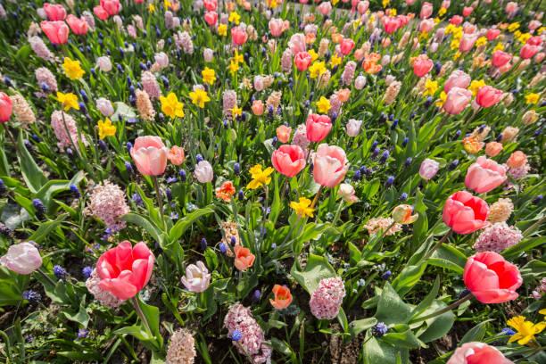 Netherlands, Lisse, Keukenhof Gardens:スマホ壁紙(壁紙.com)