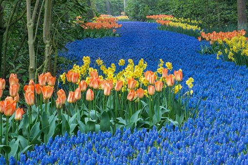 Keukenhof Gardens「Netherlands, Lisse, Keukenhof Gardens」:スマホ壁紙(1)