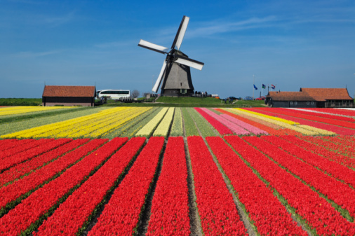 Lisse「Netherlands」:スマホ壁紙(5)