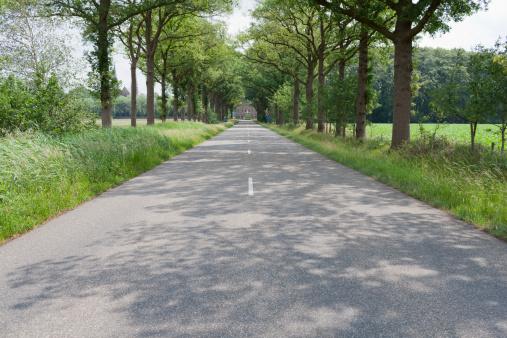 North Brabant「Netherlands, North-Brabant, Tilburg, Road lined with trees」:スマホ壁紙(2)