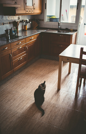 Kitten「Tabby cat sitting on kitchen floor」:スマホ壁紙(14)
