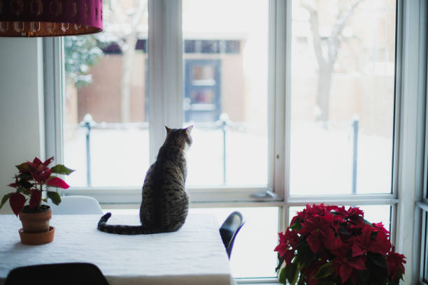 Tabby cat sitting on a table and looking outsdie:スマホ壁紙(壁紙.com)