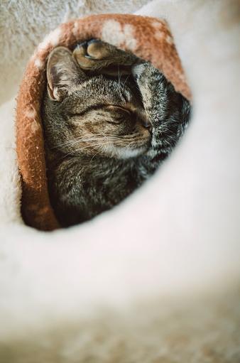 Scratching Post「Tabby cat sleeping in burrow」:スマホ壁紙(19)