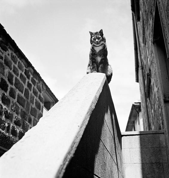 Tabby Cat「Tabby Cat Sitting On A Wall」:写真・画像(5)[壁紙.com]