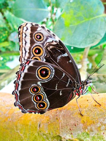 虫・昆虫「Six Eyed butterfly on a tree in the wild」:スマホ壁紙(6)