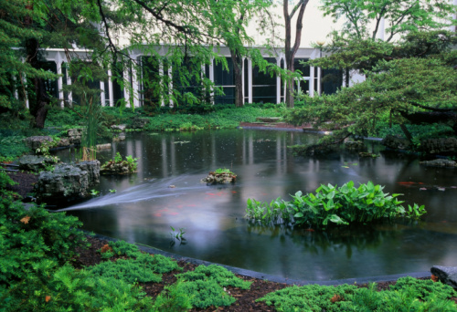 Carp「Fish Pond in rain, Oberlin College Conservatory, Ohio」:スマホ壁紙(6)