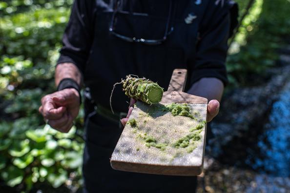 ビジネスと経済「Wasabi Farming In Japan」:写真・画像(9)[壁紙.com]