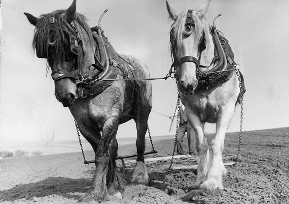 Working Animal「Workhorses」:写真・画像(12)[壁紙.com]