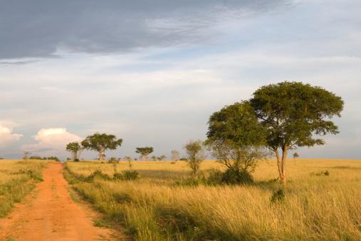 Uganda「African Landscape in Uganda」:スマホ壁紙(1)