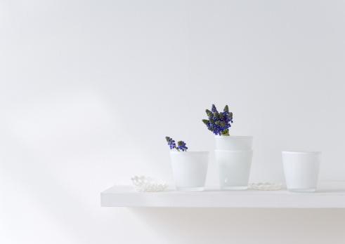 Grape Hyacinth「Grape hyacinths in glass」:スマホ壁紙(13)