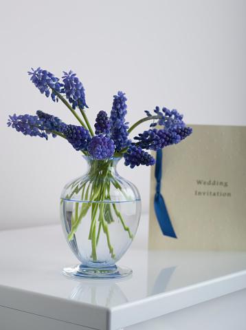 Hyacinth「Grape Hyacinths and a wedding invitation」:スマホ壁紙(6)