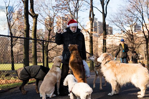 Bestpix「New York City Celebrates Christmas」:写真・画像(8)[壁紙.com]