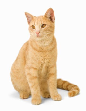 Ginger Cat「Ginger cat sitting on floor, close-up」:スマホ壁紙(8)
