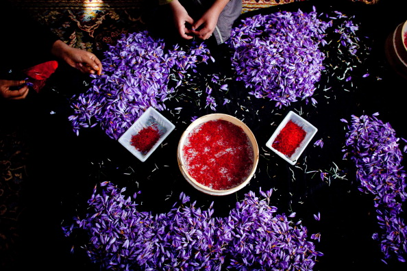 Radish「Saffron Harvested in Herat」:写真・画像(7)[壁紙.com]