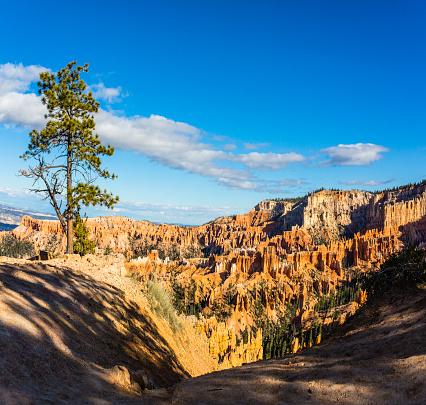 Natural Column「Tree in Bryce Canyon, USA」:スマホ壁紙(16)