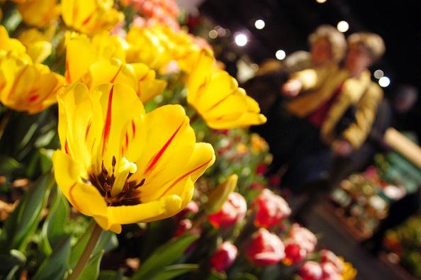 花「Philadelphia's Famed Flower Show Celebrates Mother Nature」:写真・画像(19)[壁紙.com]