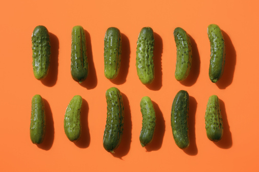 Pickle「Two rows of pickles」:スマホ壁紙(11)