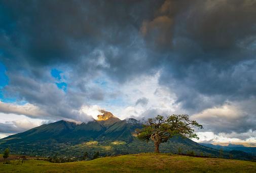 Single Tree「The Healing tree (El Lechero) by Imbabura volcano, Otavalo, Ecuador」:スマホ壁紙(14)