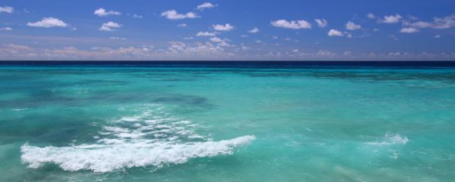 Frond「Fabulous island of Barbados」:スマホ壁紙(1)