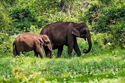 象「Elephant walk」:スマホ壁紙(13)