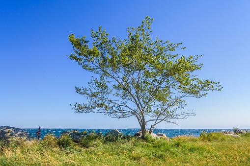 Helsingor「Lone Tree at Coast」:スマホ壁紙(8)