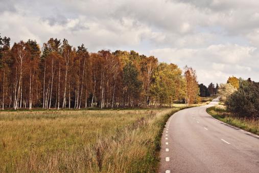 Empty Road「Swedish landscape in autumn」:スマホ壁紙(0)