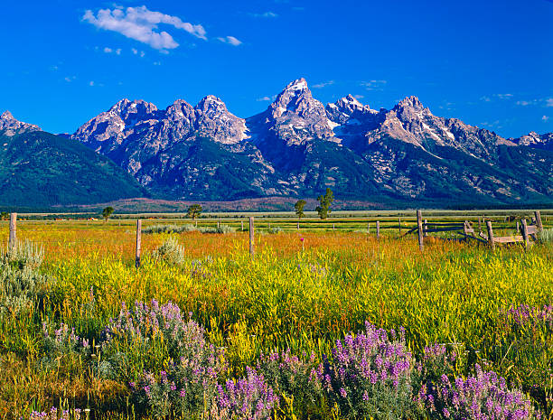 Mountains and wildflowers at Grand Teton National Park:スマホ壁紙(壁紙.com)