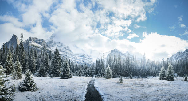 Mountains and forest in winter, Yoho National Park, Field, British Columbia, Canada:スマホ壁紙(壁紙.com)
