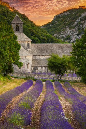 Abbey - Monastery「Abbey with blooming lavender field at dusk」:スマホ壁紙(12)