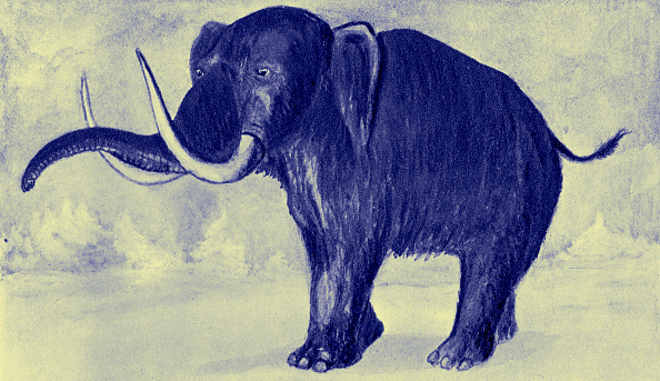Painting - Activity「Mammoth」:写真・画像(12)[壁紙.com]