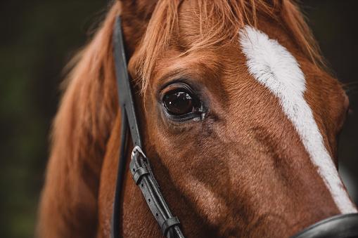 Horse「Horses see right through you」:スマホ壁紙(7)
