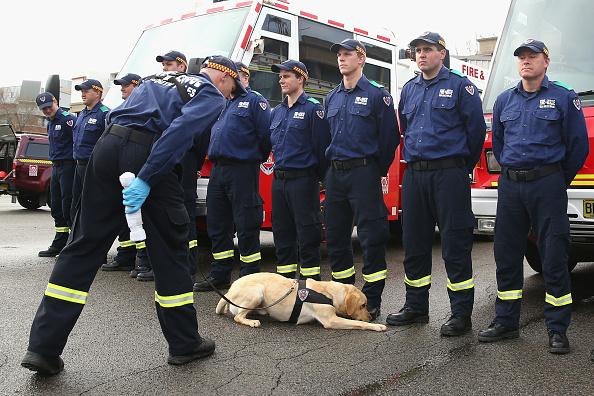 New「Firefighting Dogs Show Off Their Accelerant Detection Skills」:写真・画像(8)[壁紙.com]