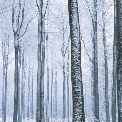 風景(季節別)「View of forest in winter, low angle view」:スマホ壁紙(7)