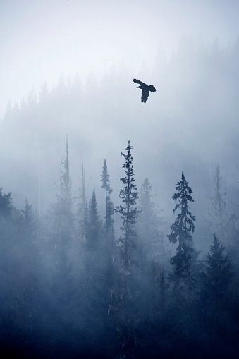 British Columbia「View of forest on cold foggy day」:スマホ壁紙(18)