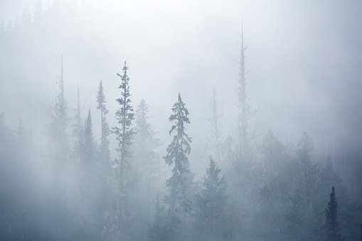 Frost「View of forest on cold foggy day」:スマホ壁紙(10)