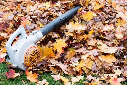 Maple Leaf「Leaf Blower on a Pile of Leaves. Fall Clean-Up」:スマホ壁紙(7)