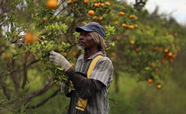 Orange - Fruit「Citrus Greening Diseases Threatens Florida's Orange Industry」:写真・画像(8)[壁紙.com]