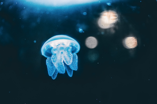 Water Surface「jelly fish in the water」:スマホ壁紙(6)