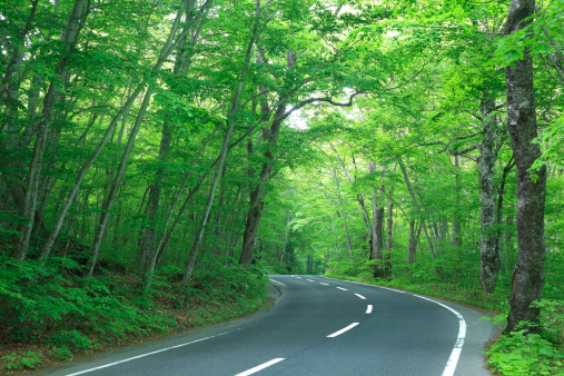 Japan「Country Road Through Forest」:スマホ壁紙(15)