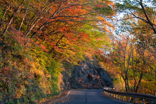 Nikko City「Country Road in Autumn」:スマホ壁紙(11)
