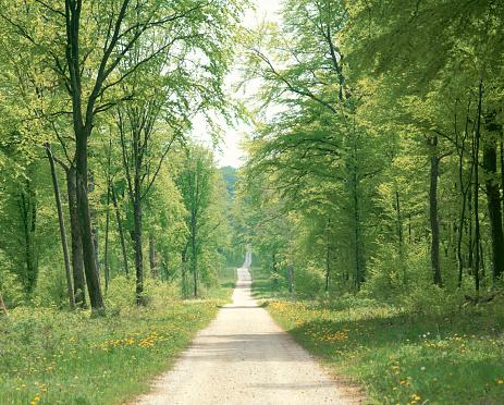 たんぽぽ「Country road」:スマホ壁紙(17)