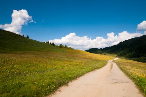 花畑「Country road 、鮮やかな色調の」:スマホ壁紙(7)