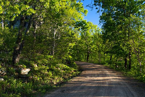 オーク林「Country road through the woods of Northwest Arkansas」:スマホ壁紙(6)