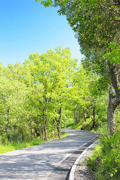 Country Road Winding Through Green Trees in Sunlight:スマホ壁紙(壁紙.com)