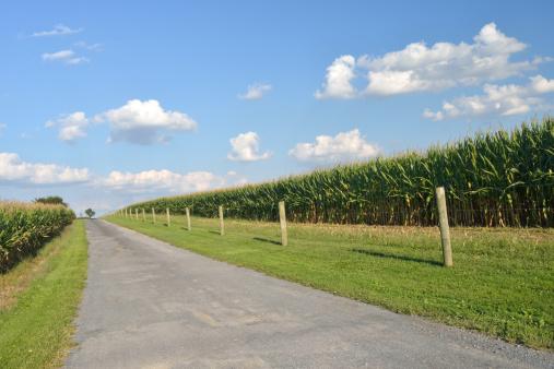 Pennsylvania「Country Road」:スマホ壁紙(5)