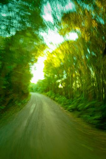 かえる「Country road thru forest towards sunlight」:スマホ壁紙(8)