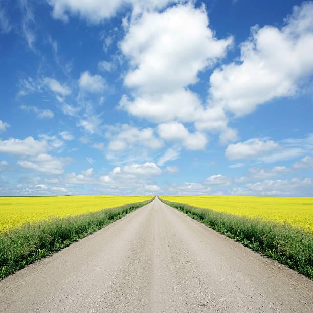 XXXL country road and canola:スマホ壁紙(壁紙.com)