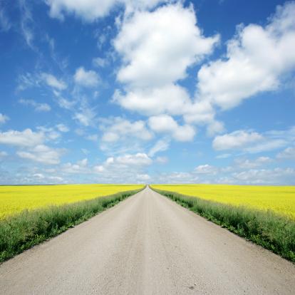 Horizon「XXXL country road and canola」:スマホ壁紙(7)