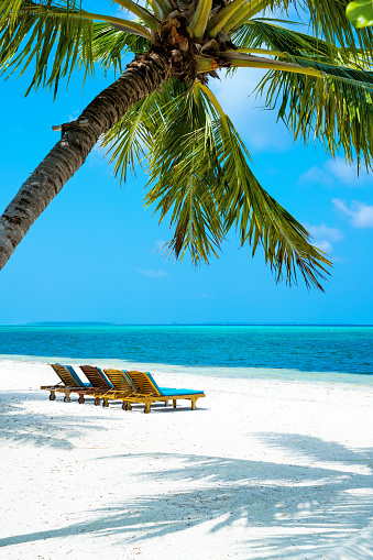 豪華 ビーチ「パーム、モルディブ、Herathera 島の熱帯の楽園ビーチ、サンベッド」:スマホ壁紙(12)