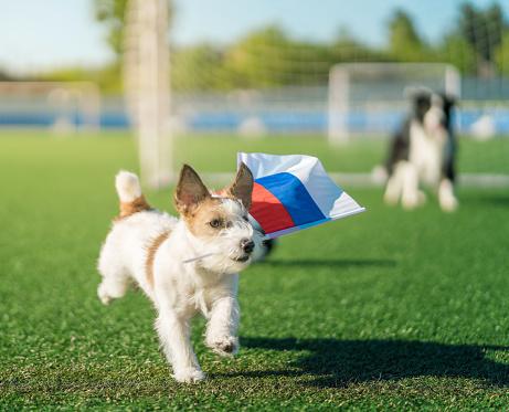 Sportsperson「Fan Dog of Russian football with Country Flag」:スマホ壁紙(19)